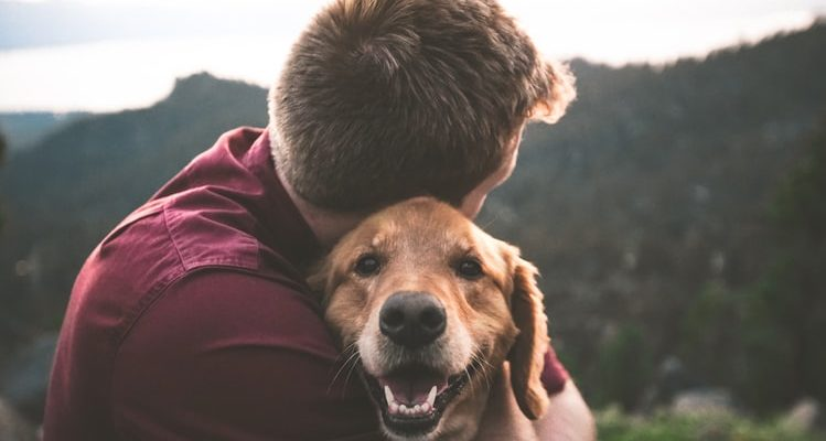 How to Improve Your Dog's Health and Reduce the Risk of DCM